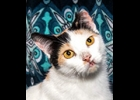 Cleo is a 2-3 yr old calico that is still waiting for a furever home. It's her turn and she's waited long enough for you. She gets along with cats, dogs and kids. She is spayed and up to date on vaccines.  If Interested call Amy at Furfest 1-989-894-0174.