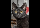 Neely is a black panther girl looking for a furever home. She's spayed and up to date on vaccines.  If interested call Amy at Furfest Rockin the Rescues 1-989-894-0174.