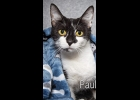 Pauline is a very beautiful black and white cat. She is 3-4yrs. old, spayed and up to date on vaccines.  She's a great cat getting over looked for kittens If interested call 989-894-0174.
