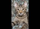Theodor is a brown tabby male. He's fun and very playful, neutered and up to date on vaccines.  If you are interested in giving him a home call 1-989- 894-0174.