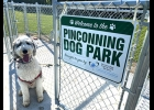 This happy dog is looking forward to the Grand Opening of the new Pinconning Dog Park on Wednesday, August 26th.                                                   --Courtesy Photo