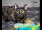 Madonna is a pretty tortie girl looking for a forever home.  She's very sweet and playful. She is spayed and up to date on vaccines.  If interested call 1-989-894-0174.